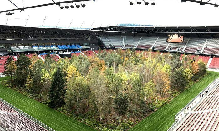 For Forest Baume Ubersiedeln Doch Nach Niederosterreich