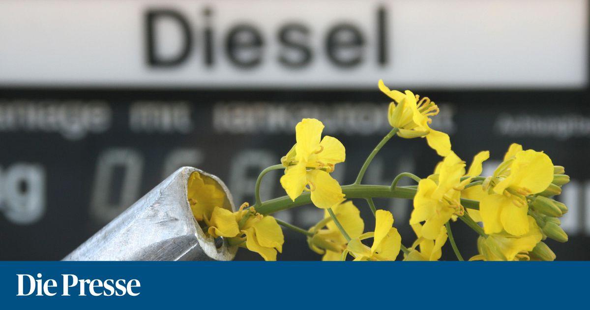 Europaparlament will Palmölverbot für Biodiesel