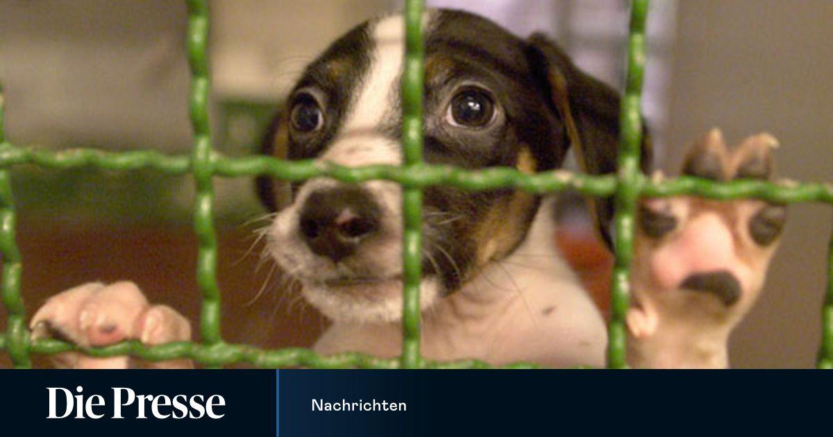 Tierquartier Wie Wien Den Tierschutz Neu Erfinden Will